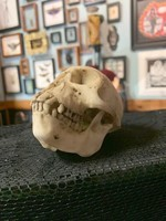 Hand-Painted Monkey Skull with Natural Bone Finish
