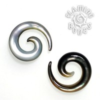 Small Diameter Mother of Pearl Spirals in Oyster
