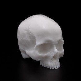 A Pound of Flesh - Silicone Synthetic Skull